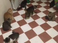 У меня 12 кошек или как я стала сильной и независимой