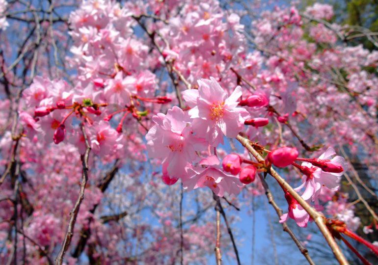 Однажды весной, в час небывало жаркого заката или за что нам коронавирус?
