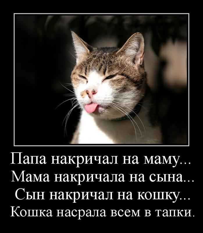 Папа накричал на маму... Мама накричала на сына... Сын накричал на кошку... Кошка насрала всем в тапки.